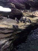 Visita de estudo ao Oceanário